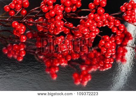 european holly on silver background