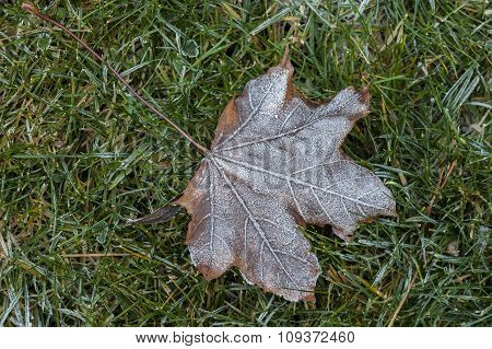 Leaf In Grass With Frost.