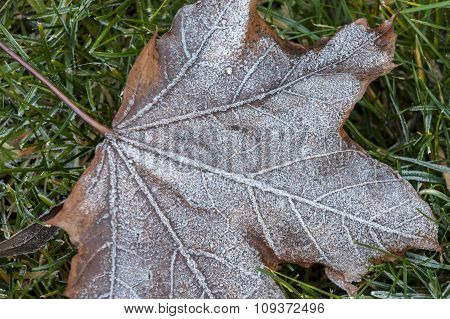 Close Up Of Frost On A Leaf.