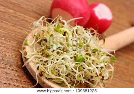 Alfalfa Sprouts On Scoop And Radish, Wooden Background