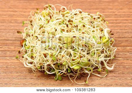Alfalfa And Radish Sprouts On Wooden Table