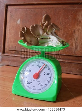 Indian oyster mushroom on green weighing scale
