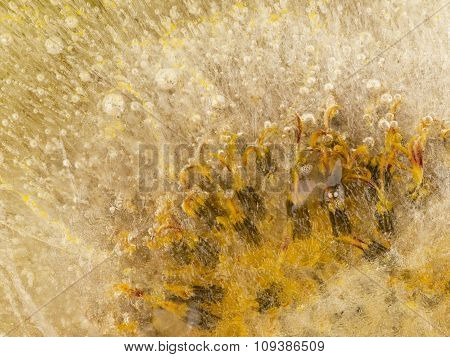 Lemon-yellow Organic Abstraction