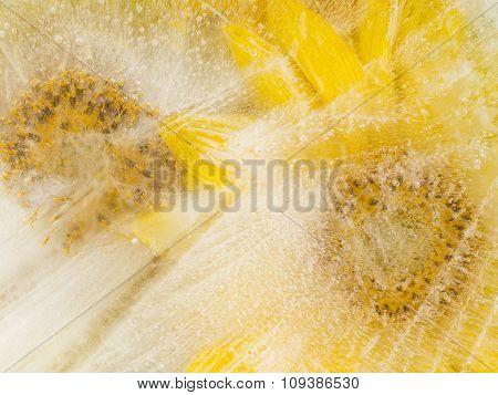 Yellow Sunflowers On Ice