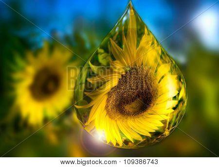 Sunflower in drops