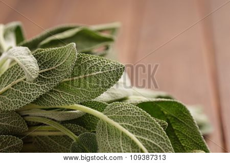 Fresh Sage Bundle