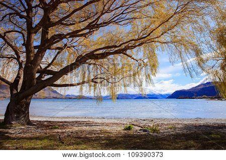 Beautiful Scenic Of Lake Wanaka In South Island New Zealand   Im