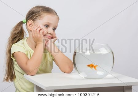 Four-year Girl Admires A Goldfish In An Aquarium