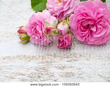 Antique Roses On The White Rustic Background