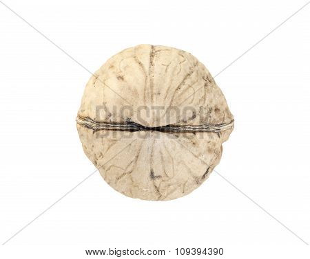 Close Up Picture Of A Walnut Isolated On White