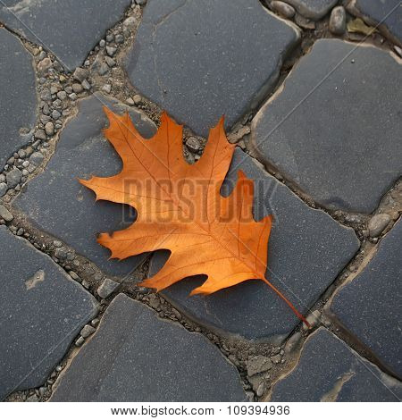 One Fallen Oak Leaf