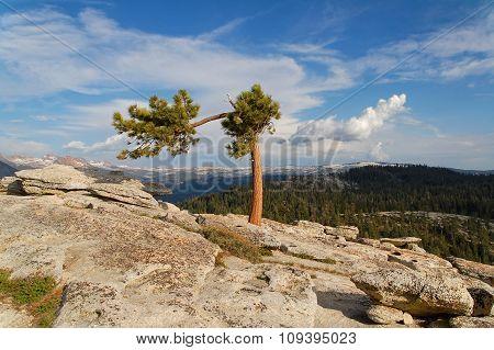 Yosemite Nation Park