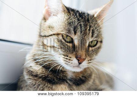 Light Portrait Of A Cat On The Window