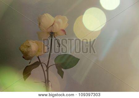 beautiful flowers roses