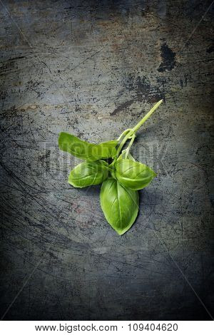 basil leaves on dark rustic background