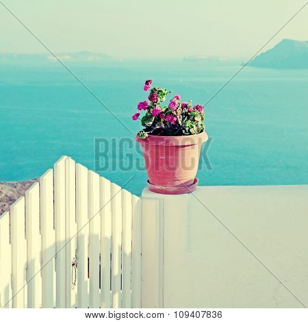 Vase With Flowers At Balcony In Santorini, Greece