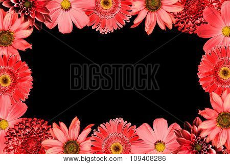 Frame With Red Flowers Collage Mix Gerbera, Chrysanthemum, Dahlia, Primula, Decorative Sunflower Iso