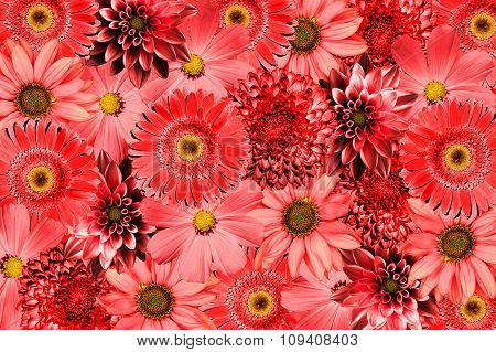 Vintage Background With Red Flowers Collage Mix Gerbera, Chrysanthemum, Dahlia, Primula, Decorative