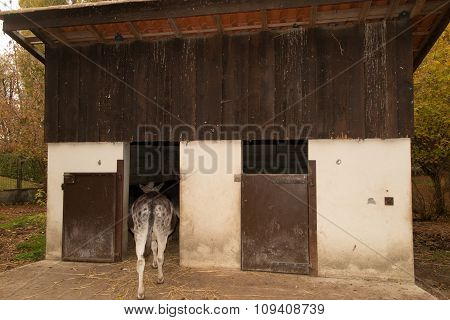 Back View Of A Donkey Hiding In A Wooden House
