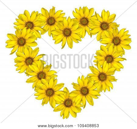 Heart Of Yellow Flowers Of Decorative Sunflowers Helinthus Isolated On White