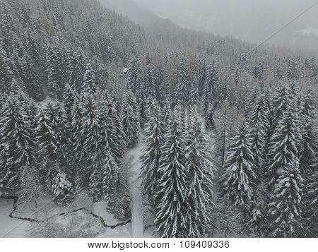 First snow in alpine forest