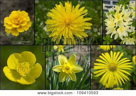 Collage Of Yellow Flowers Mix