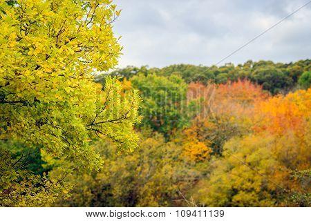 Panorama Of Autumn Trees In Australia