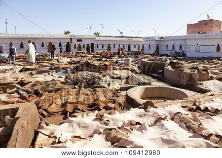 Marrakesh, Morocco - November 9, 2015: Workers at the large tannery cooperative of marrakesh handling cow, goat and camel hides.
