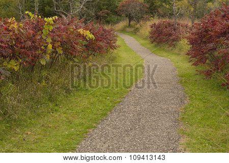 Fall Trail Scenic