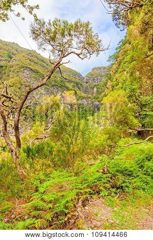 Madeira - Natural Landscape - Green Nature