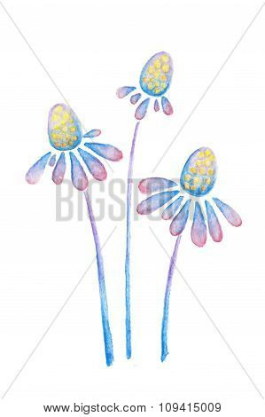 Purple Blue Flowers Of Echinacea Watercolor Pencils Drawing