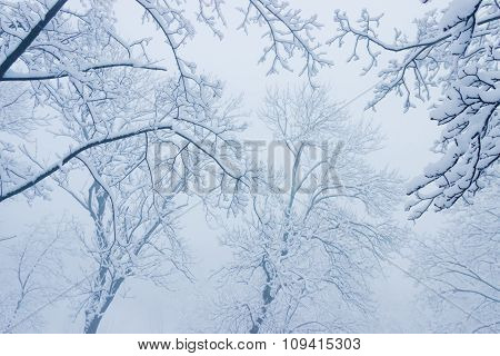 Branches Under Snow In The Fog