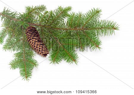 Fur-tree Branch With Fir Cone