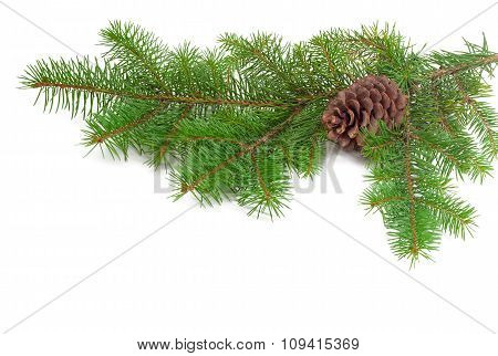 Branch Of A Fir Tree With Cone