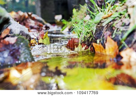 Colorful Autumn Leaves Falling In Water