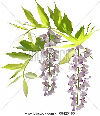 illustration with light small flowers isolated on white background