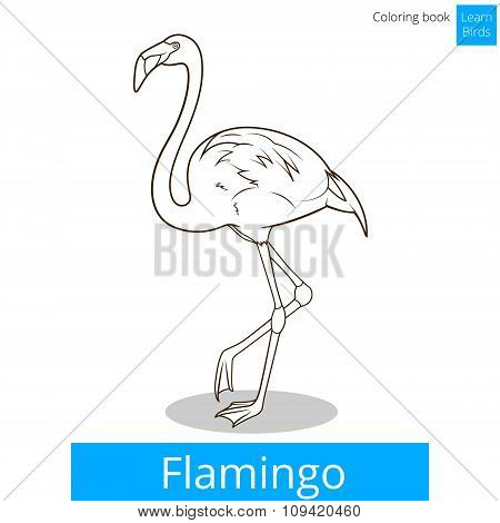 Flamingo learn birds coloring book vector