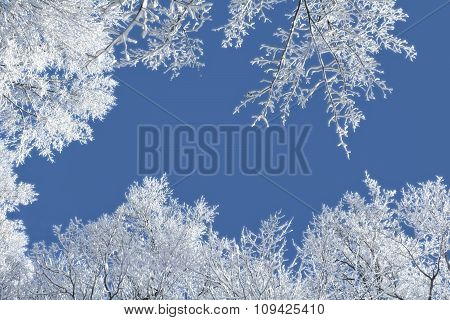 Snowy Winter Scene