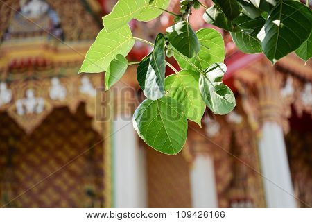 Bodhi Tree And Thai Temple