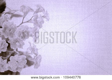 Sweet Color Flowers Of Kalanchoe Plant On Old Violet Cloth Texture Vintage Styled