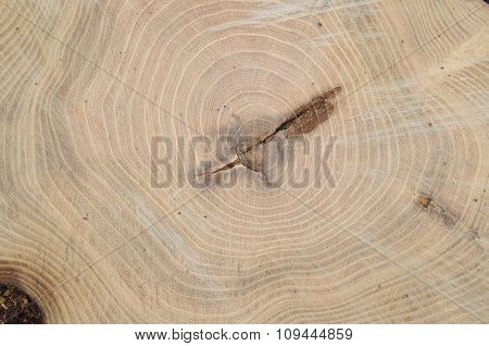 Top View Of The Annual Rings Of Cut Tree Closeup