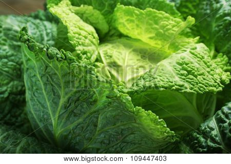 Savoy cabbage background, macro