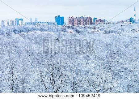 City And Snow Forest In Blue Winter Morning