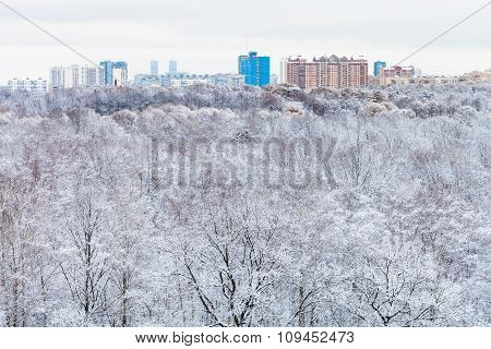 Snow Forest And City Buildings In Winter