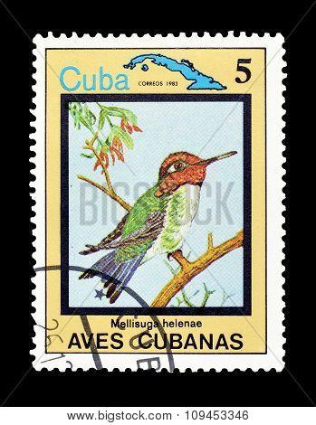 Cuba 1983 The Zapata wren