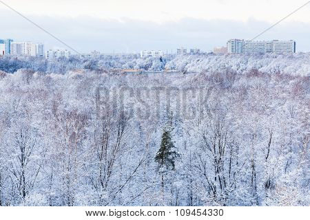 Town And Frozen Park In Winter