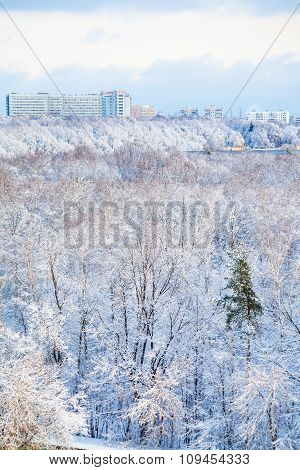 Snow Urban Park And City In Winter