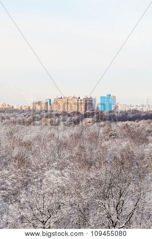 Urban Houses And Snow Woods In Winte