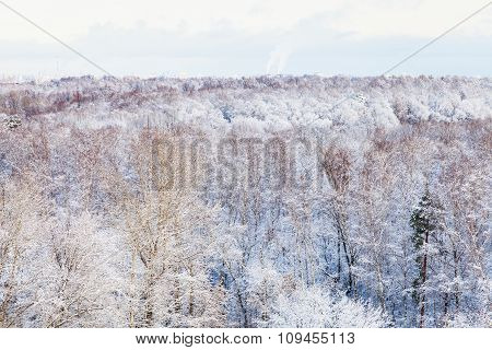 Snow Trees In Forest In Winter
