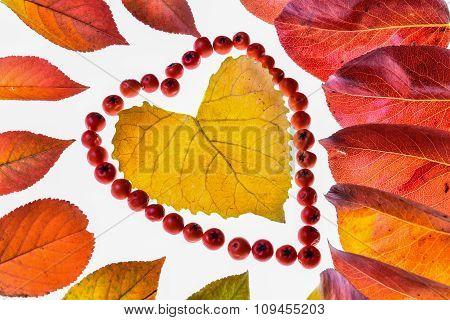 creative autumn leaves